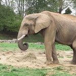 A Zoo can provide animal waste for an entire biogas plant
