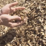 The U.S. Congress is considering wood pellets as a carbon neutral fuel source