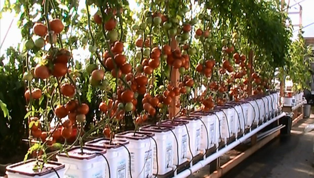 How To Efficiently Grow Healthy Food During The Winter