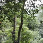 Tropical Rainforest Biome: Location, Climate, Temperature, Precipitation, Trees and plants, Animals – AEN News
