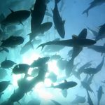 What is Sustainable Fishing and Sustainable Seafood?