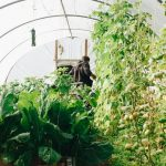 Homeowner Ideas For Sustainable Living – Solar, Greenhouses & More
