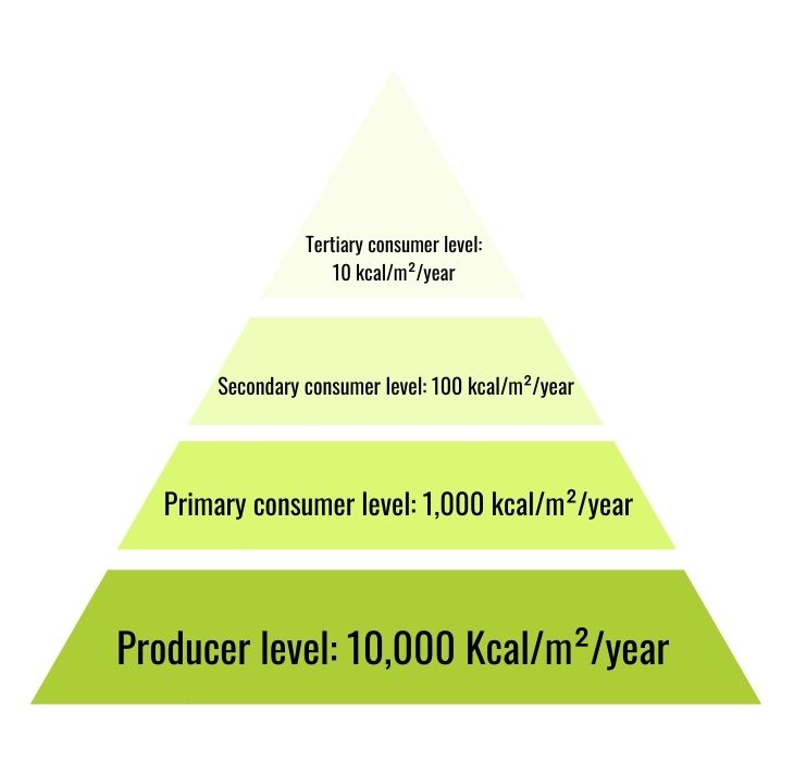 pyramid of energy with four trophic levels